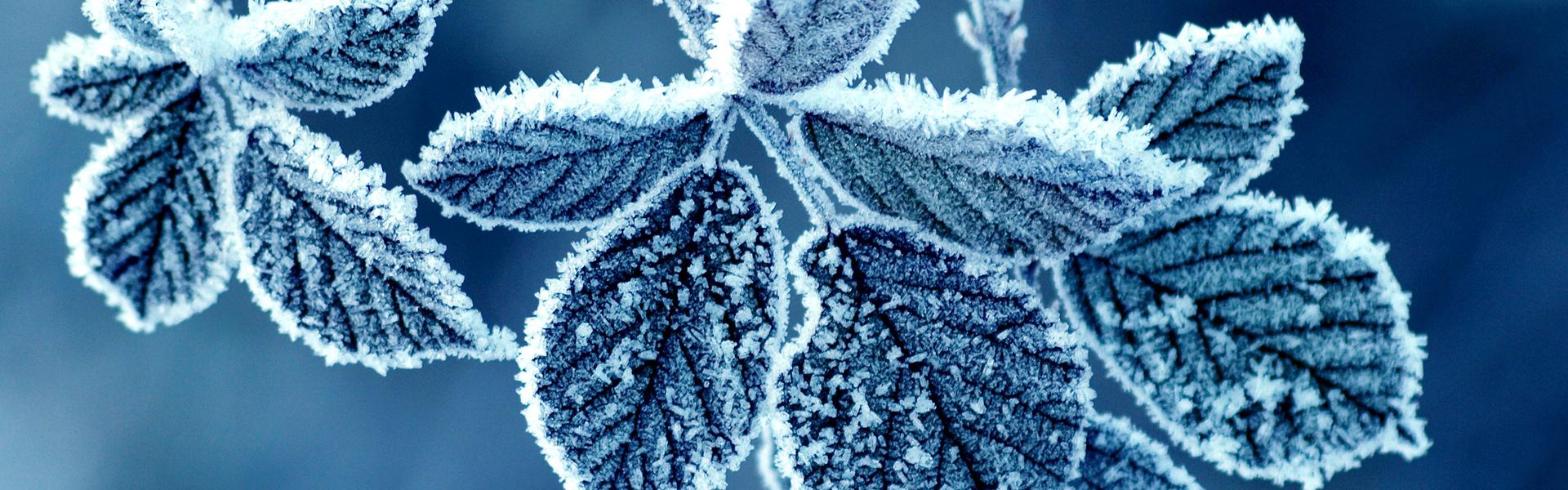 Zomerse warmte benutten in de winter?